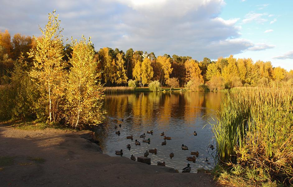 фото парк покровское-стрешнево