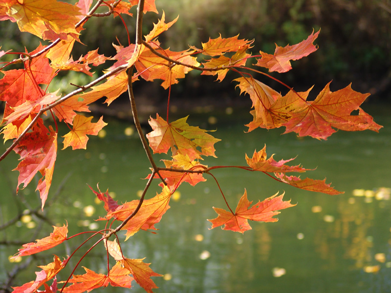 Картинки осень сентябрь природа